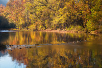 Fall in the Arkansas Ozarks