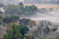 Fog, three cows in the valley