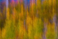 Many Colors