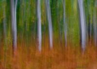 Aspen and Ferns