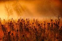Backlit Bottomland