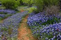 South Central Texas Spring