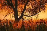 Bottomland Mist at Sunrise