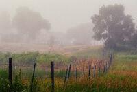 Fog along a fence