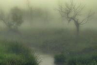 Fog along Medicine Creek