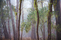 Monterey fog
