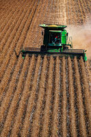 Harvesting soy beans