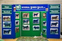 Bull semen