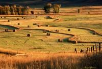 Bales, fields