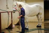 Horse, stock show