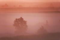 Pre-dawn fog