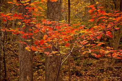 Recent Work- Fall in the Arkansas Ozarks