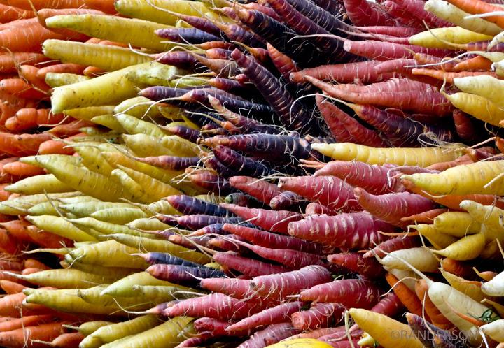 Carrots, photo