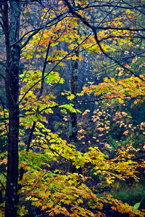 Fall, photo