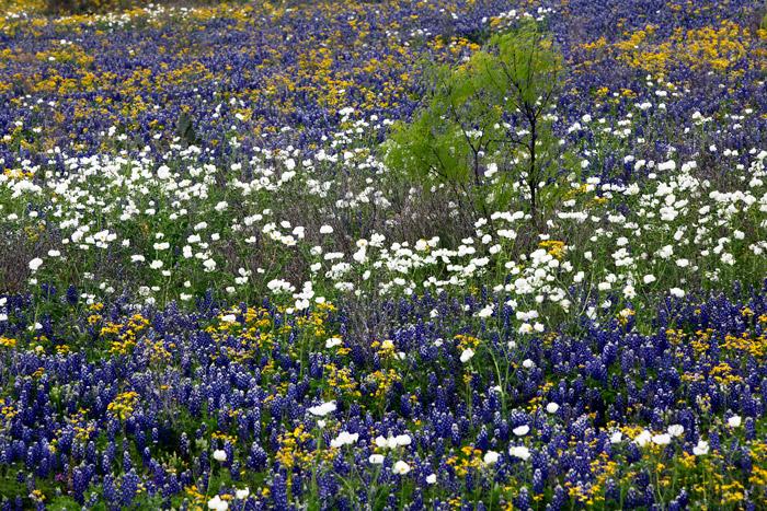 Wildflowers, photo