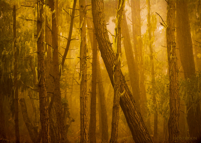 Forest, California, photo