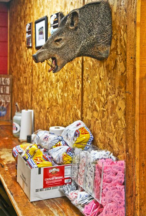 Wild boar, photo