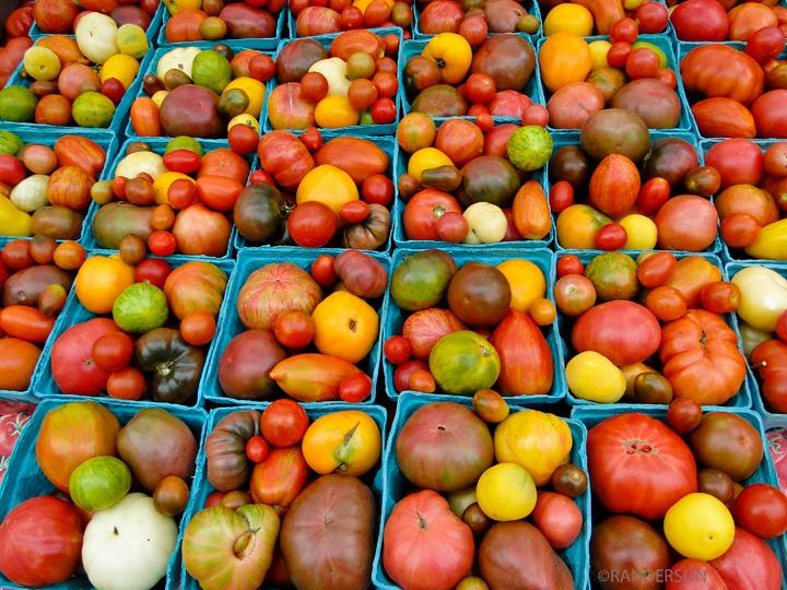 tomatoes, photo