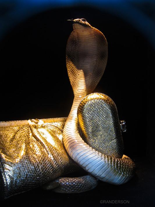 cobra, photo