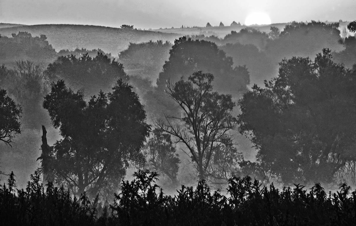 Sunrise fog over valley trees