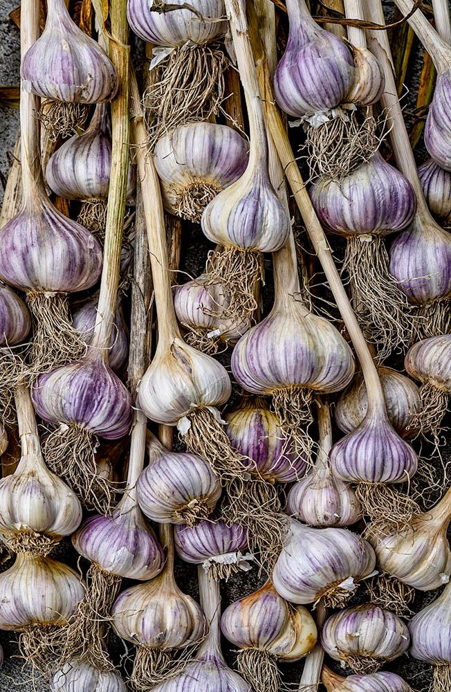 Garlic 1