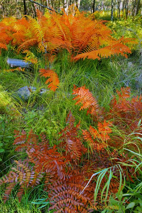 Acadia Garden