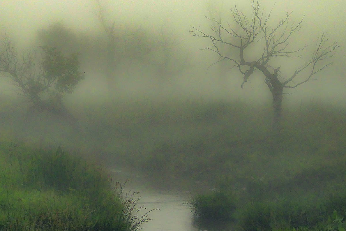 Fog along Medicine Creek