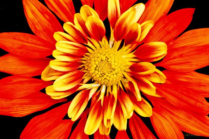Flower parts, photo
