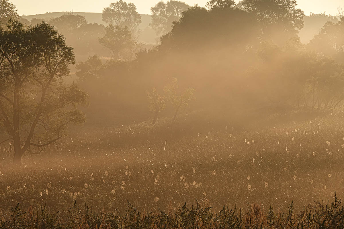 Sunrise fog with spiderwebs in the meadow
